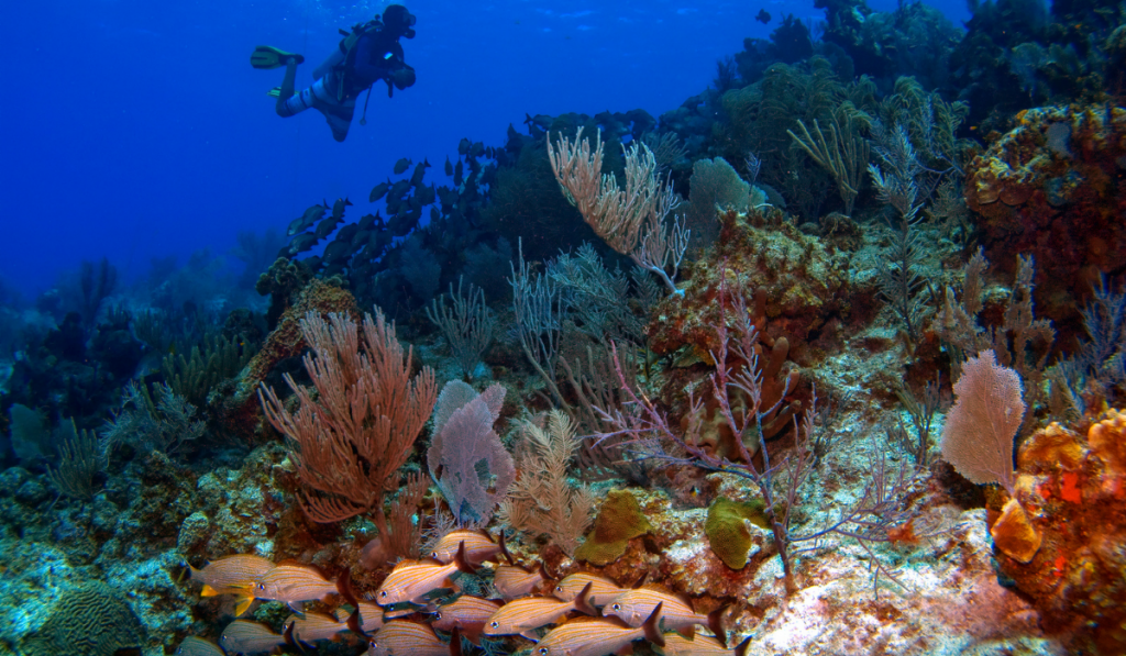 A man scuba diving with the beautiful corals.